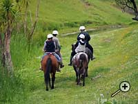 Trekking at Tasman Farm Rides
